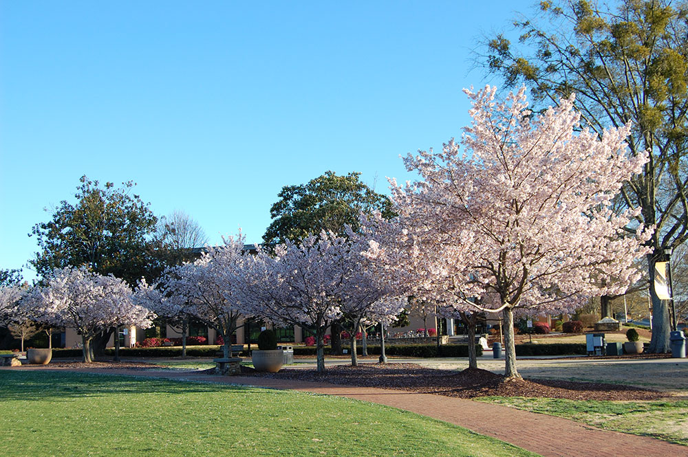 Campus Grounds